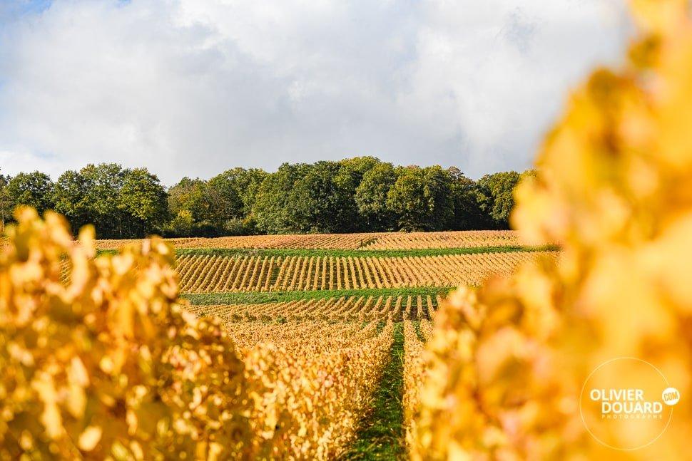 Champagne Montgueux vignes UNESCO